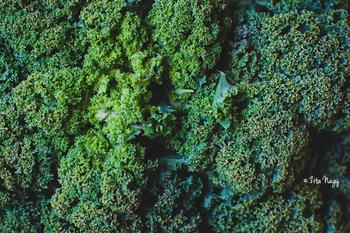mang receptek - Vegetáriánus receptek a18a95d403