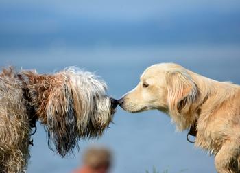 Mi is kipróbáltuk a fonyódi kutyastrandot b25ed7cbff