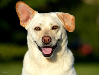 Gyepmesteri telepről fogadtuk örökbe a kutyánkat d504cae312